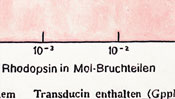 Rhodopsin in mol fractions - painted oil color