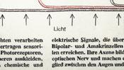 Light (schematic diagram)