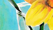 Flowers: narcissus (Watercolor) (Detail 2)