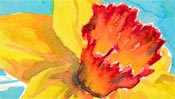 Flowers: narcissus (Watercolor) (Detail 3)